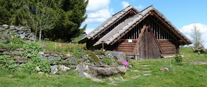 Drewniany dom – plusy i minusy.